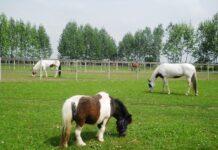 Pensione per cavalli nella campagna Lodigiana