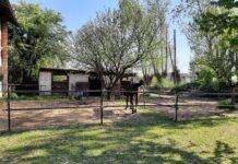 Si offre pensione cavalli al prato all'interno del Parco del Ticino (Vigevano)